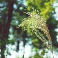 Spring Poetry by dyefish