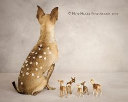 Bambi and Friends by planet0