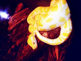Snake by lorewith-na-athend