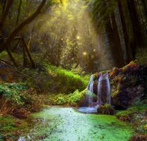 Forest Pool Premade Background by little-spacey