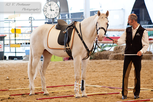 Cremello Lusitano_14 by CalyHoney