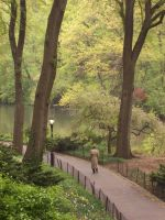 new york city central park by taevans