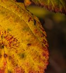 Gleaming Autumn by CanonAdventures