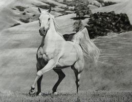 White Horse by DefiantArtistry