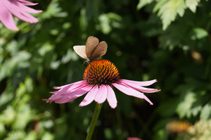 butterfly on a pink flower by RainyAndButterfly