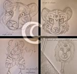 drawing tigers and a lion by caseyandhismunks