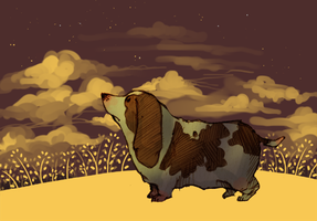 Basset by springonion