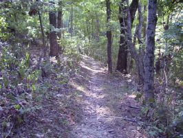 Forest Trail Stock 001 by PagansStockWorld