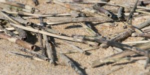 fun sticks in the sand by averyskees