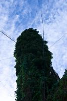 Old Telegraph Pole by TonallyTormented