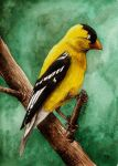 Backyard Birds 5: Goldfinch by tee-kyrin