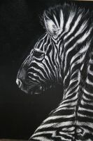 Zebra II by FatCatDesigns