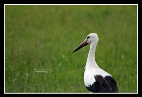 black beak by declaudi
