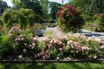 Rose Garden 4 By Cindysart-stock by CindysArt-Stock