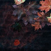 Water leaves by ShaneGallagher