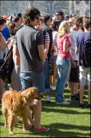 Dogs in Boulder 6 watching 420 by PBPhoenix