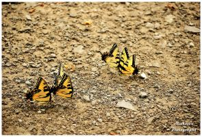 A Small Puddle Of Butterflies by TheMan268