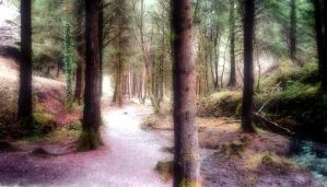 Enchanted Forest by Forestina-Fotos