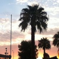 Sunrise with Palm Trees by lionessgirl2007