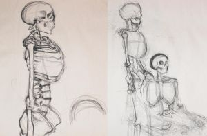 Skeleton Study by MsCyberBird