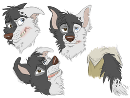 Scarred Character: As Border Collie by RaiynClowd