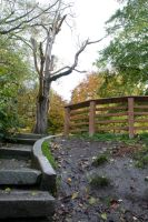 Path to Wooden Railing Lookout by happeningstock