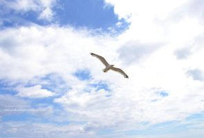 Flight to Freedom by AvenueOfLoneliness