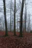 Foggy Forest 06 by sacral-stock