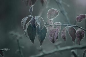 Day 324: Cold by Kaz-D