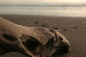 Dry Driftwood 5358947 by StockProject1