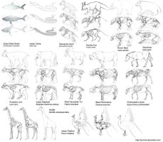 Animal anatomy by LynxMB