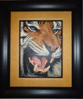 Framed photo of 'Tiger with the missing Tooth by DanBurgessTheArtist