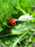 Ladybird I. by DoctorWhy903
