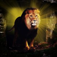 The Lion of Judah by robhas1left