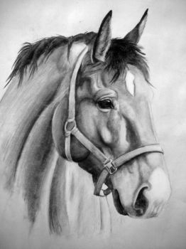 Charcoal Horse by JannaLowe
