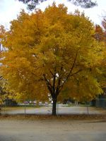 Canadian Fall Colours 33 by Aswang301