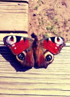 Peacock Butterfly by AlinaGorn