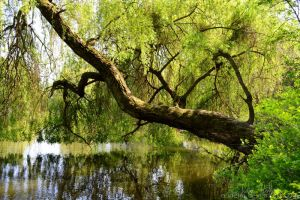 fairytale. by Eunelia