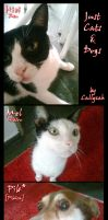 Cats and Dogs by Callyzah