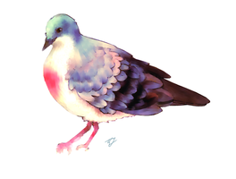 Luzon bleeding heart pigeon by Seny-chan
