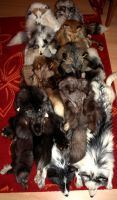 So many pillows by Braveheart-Taxidermy