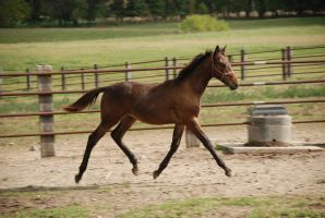 StandieFoal5 by EquestrianPassion