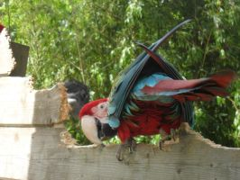 perroquet by mama35340