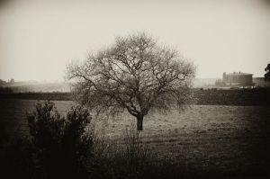 I'm here, lonely by Tiris76