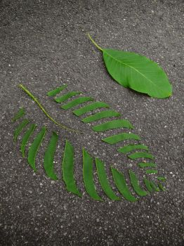 Land Art - Widespread Leaf by McMuth