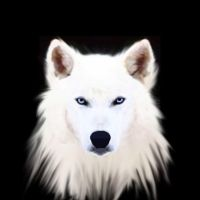 White wolf by WolfheartedSoul
