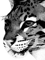 Clouded Leopard by angeldth