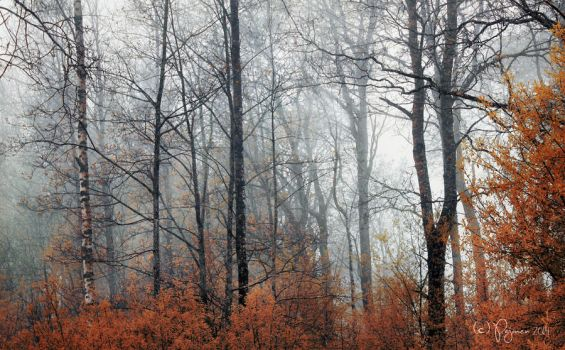 In the misty morning by Pajunen