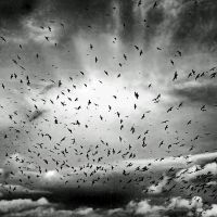 Gulls+Crows: endgame by Coigach