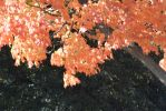 2014 Natural Autumn Color 24 by Miss-Tbones